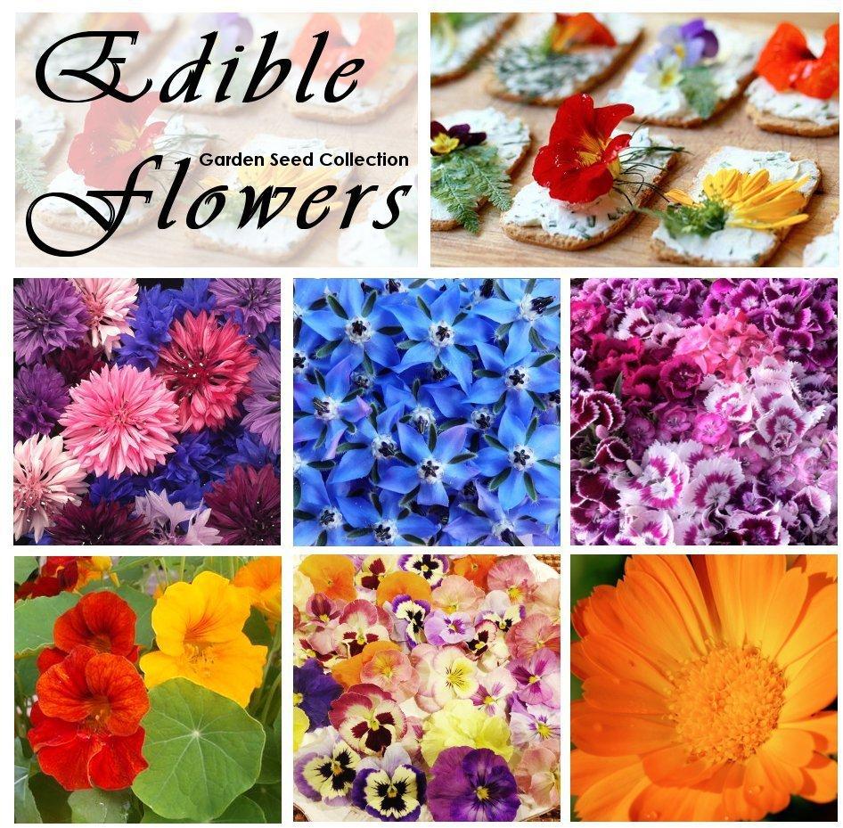 Edible Flowers Organic Garden Seed Collection 6 Varieties