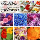 Edible Flowers Organic Garden Seed Collection 6 Varieties