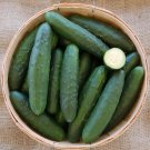 Bulk Prolific Marketmore 76 Slicing Cucumber Cucumis Sativus - 500 Seeds