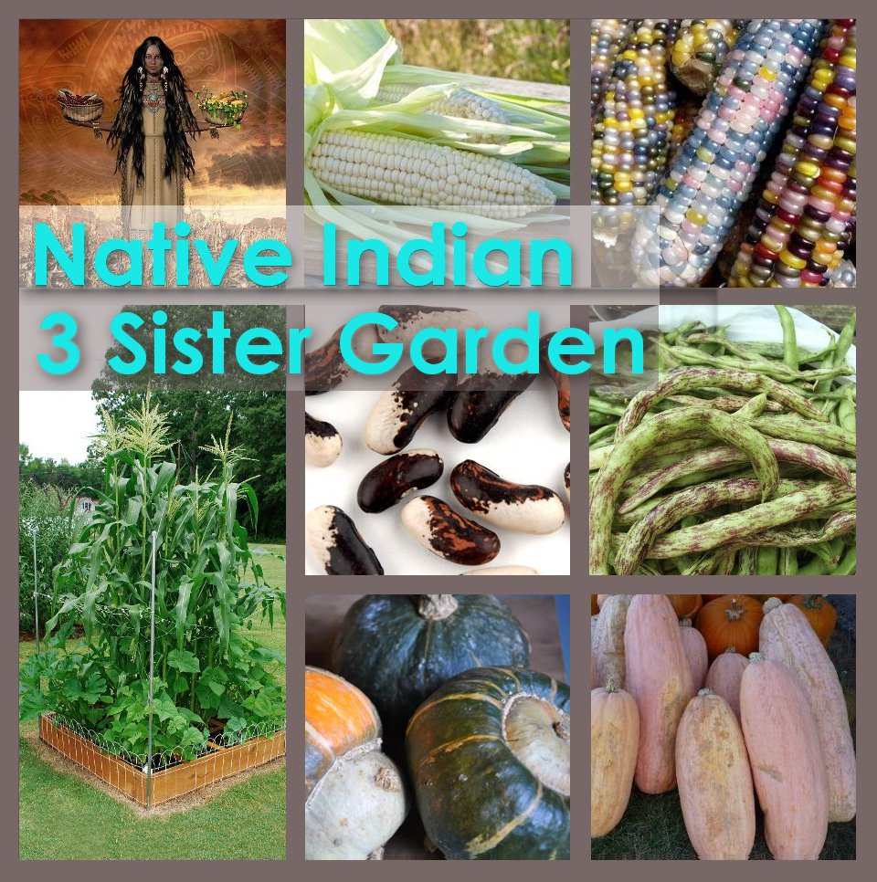 Native American Indian Heirloom Three Sister Garden Seed Collection -  6 Varieties