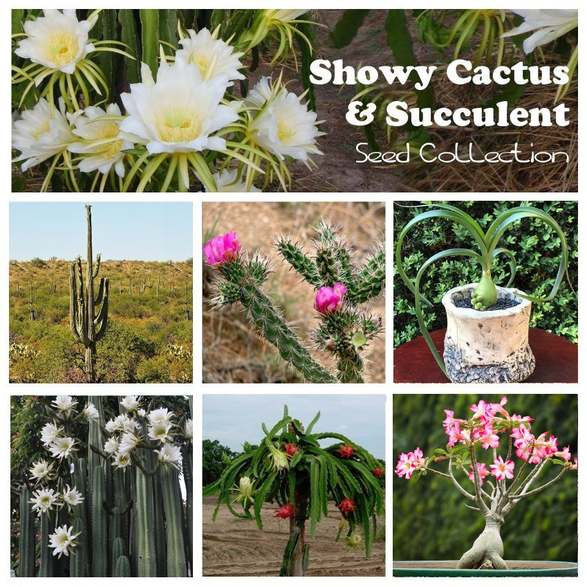 Cactus and Exotic Succulent Seed Collection - 6 Varieties