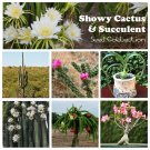 Exotic Succulent and Cactus Seed Collection - 6 Varieties