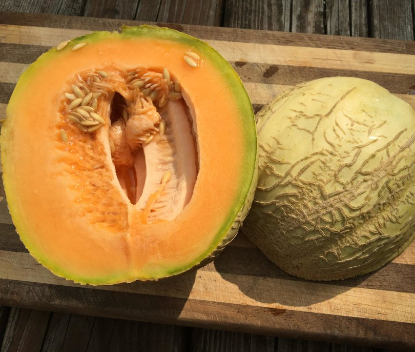 Rare Amish Heirloom Melon Cucumis melo - 25 Seeds