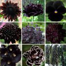 Almost Black Naturally Dark Monochromatic Flowers Seed Collection - 9 Varieties
