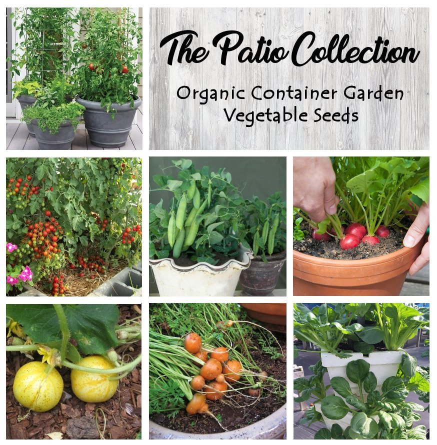 Patio or Balcony Organic Container Vegetable Seed Collection - 6 Varieties