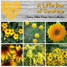 Cheery Little Box of Sunshine Yellow Flower Seed Collection - 6 Varieties