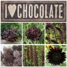 Box of Chocolate Garden Flower Seed Collection 6 Varieties