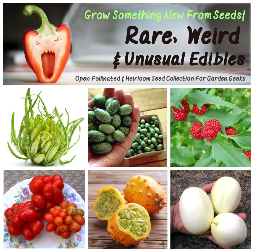 Unconventional Weird and Wacky Heirloom Edibles Garden Seed Collection - 6 Varieties