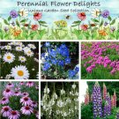 Unique Perennial Garden Flower Seed Collection - 6 Varieties