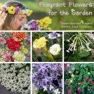 Sweet Scent Fragrant Garden Flower Seed Collection - 6 Varieties