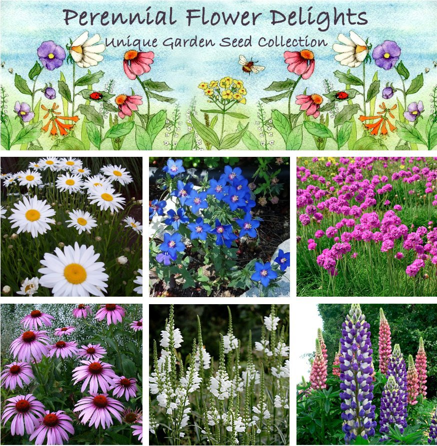 Colorful Perennial Garden Flower Seed Collection - 6 Varieties