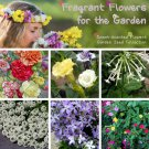 Sweet Scent Fragrant Garden Flower Seed Collection - 6 Varieties