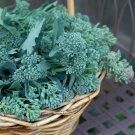 Heirloom Calabrese Green Sprouting Broccoli Brassica oleracea var. italica - 400 Seeds