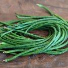 Organic Dark Green Chinese Long Bean Vigna Unguiculata Sesquipedalis - 40 Seeds