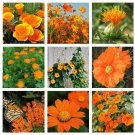 Tangerine and Orange Shades Monochromatic Flower Seed Collection - 9 Varieties