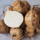 Organic Jicama Yam Bean Pachyrhizus Erosus - 30 Seeds
