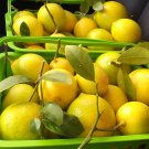 8 Fresh Organic Texas 'Meyer' Lemons Whole Fruits - 2 lb