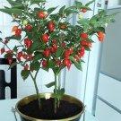 Bonsai Sweety Drop Pepper Biquinho Pimenta De Bico - 20 Seeds