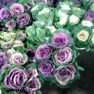 Ornamental Kale Cutflower Cabbage Mix Brassica oleracea - 20 Seeds
