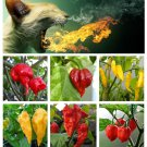 Hotter Than Hell - Worlds Hottest Organic Chili Peppers Seed Collection - 6 Varieties