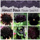 Almost Black Flower Seed Collection - 6 Varieties