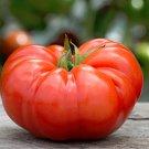Tomato Italian Giant Beefsteak Solanum Lycopersicum - 30 Seeds
