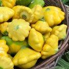 Organic Patty Pan Scalloped Summer Squash Cucurbita pepo - 25 Seeds