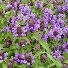 Organic Self-Heal Herb Prunella vulgaris - 80 Seeds