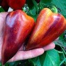 Heirloom Sweet Pepper Striped Violet Sparkle Capsicum annuum - 20 Seeds