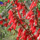 Scarlet Red Firecracker Penstemon Penstemon eatonii - 80 Seeds