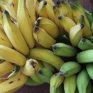 Fresh Produce Exotic Plantain Whole Fruits - 4 Lbs