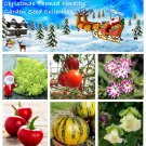 Christmas Themed Vegetable and Flower Seed Collection - 6 Varieties