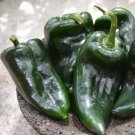 Organic Poblano Gigantea Heirloom Chili Pepper Capsicum annuum - 25 Seeds