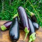 Organic Heirloom Diamond Eggplant Aubergine Solanum melongena - 25 Seeds