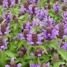 Self-Heal Herb Organic Prunella vulgaris - 80 Seeds