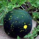 Heirloom Moon and Stars Watermelon Citrullus lanatus - 30 Seeds