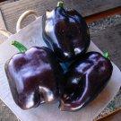 Purple Beauty Heirloom Sweet Bell Pepper Capsicum annuum - 30 Seeds