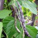 Heirloom Rattlesnake Pole Bean Phaseolus vulgaris - 50 Seeds