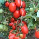 Italian Heirloom Roma Tomato Organic Lycopersicon lycopersicum - 30 Seeds