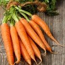 Organic Heirloom Tendersweet Carrot Seed Daucus Carota - 150 Seeds