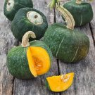 Heirloom Winter Squash Burgess Buttercup Cucurbita maxima - 30 Seeds