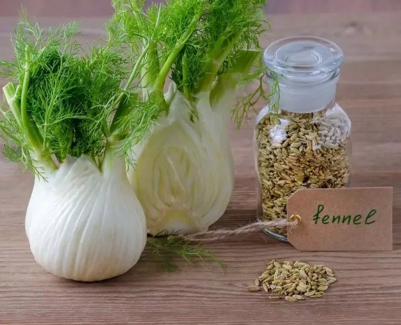 Heirloom Sweet Fennel Foeniculum vulgare dulce  - 250 Seeds