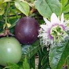 Purple Passion Fruit Passiflora edulis - 8 Seeds