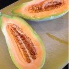 Heirloom Sweet Banana Cantaloupe Cucumis Melo - 25 Seeds
