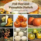 Pumpkin Patch Fall Harvest Seed Collection - 6 Varieties