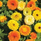 Edible Flowers Organic Calendula Herb Mix Calendula officinalis - 100 Seeds