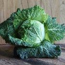 Sweet Savoy Heirloom Wirsing Cabbage Brassica oleracea  - 150 Seeds