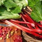 Rhubarb 'Glaskins Perpetual' Organic Perennial Rheum rhabarbarum - 25 Seeds