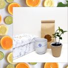 Mini Citrus Tree Gift Box - Live Plant in Porcelain Cover Cup