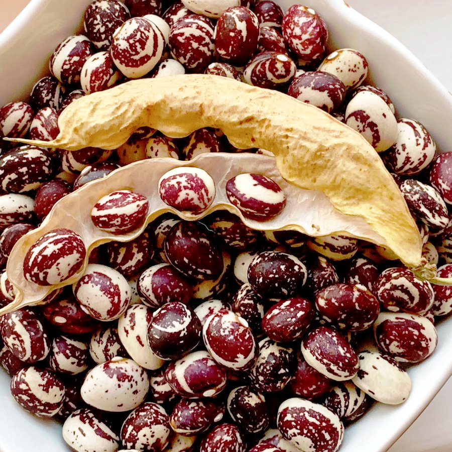 Good Mother Stallard Heirloom Pole Bean Phaseolus vulgaris - 50 Seeds
